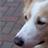 lucky,mydog Member Profile