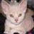 PinkBu Member Profile