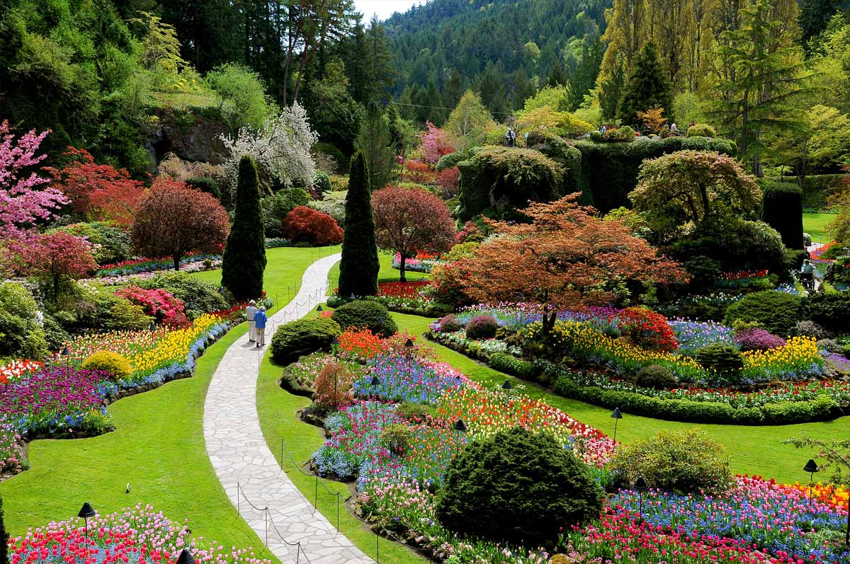 misty spring day at butchart gardens victoria b c steemit
